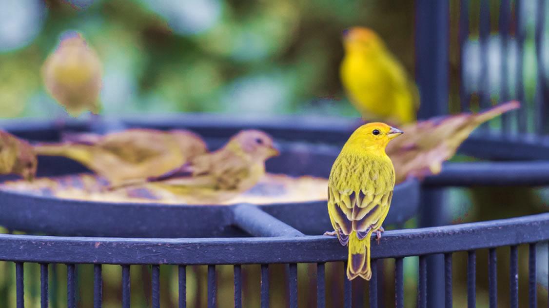 Birdwatching ou observação de aves